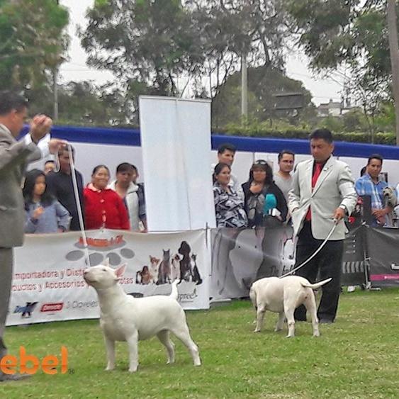 Evento-Kennel-Club-Parque-de-las-Aguas-2016-1